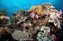 Life on the reef--gorgeous array of color and marine life... by Aj Hiller